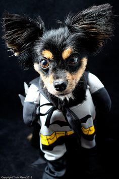 da da da da da da da da Batdog!