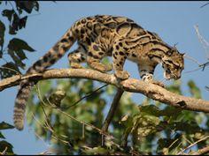 Wildlife Sanctuaries in Mizoram, India, Forests in Mizoram