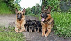 retratos de familia animales