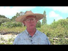 How To Grow A Tangerine Trees By Richard Skinner Hawkins Corner Nursery 1
