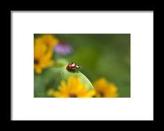 Lonely Ladybug Framed Print By Christina Rollo