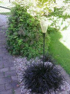 mörkt ormskägg. Som alltså inte är något gräs utan en perenn släkt med liljorsom heter Ophiopogon planiscapus `Nigrescens