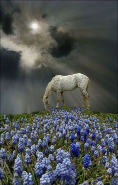 Horse and Bluebells