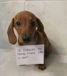 .but the wiener is so cute !