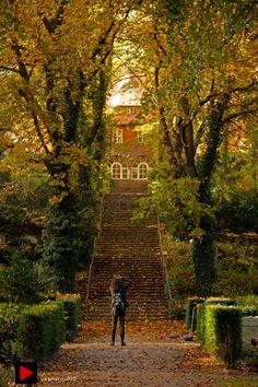 Herbst auf dem Friedhof Heerstrasse, Berlin