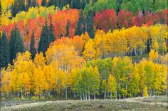 ***Colorado Color by Zack Schnepf