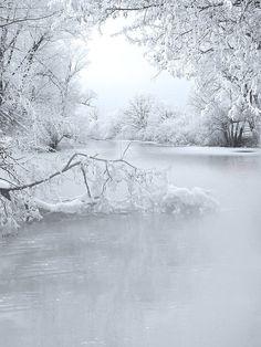 French creek in winter. French creek in winter. French creek in winter. French creek in winter. Winter Scenery, Winter Trees, Especie Animal, I Love Winter, Winter White, Snow White, Winter Light, Black White, Winter Magic