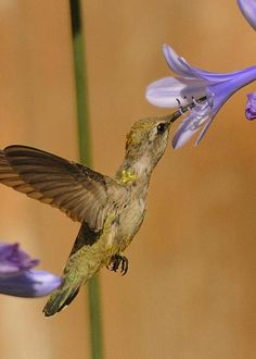 Hummingbird by Marc Bittan