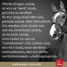 Equine Quotes, Horse Quotes, Vitamin E, Christmas Horses, Horse Riding Clothes, Equestrian Problems, Diet Books, All About Horses, Equestrian Outfits