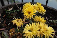 Flores amarillas.