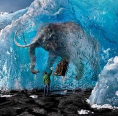 wolly mammoth frozen in ice