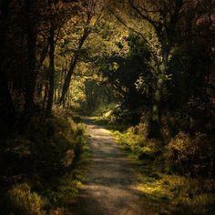 Fotografía del paisaje por Alicja Rodzik