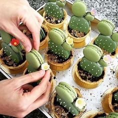Happy Friday! It's a long weekend and we're off to find some green macarons to try and attempt these adorable cacti macaron tarts by @umawadee_sriwarom ( via @bettymagazine)  (Cool Desserts)