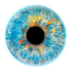 Windows to the Soul - Iris gallery | Edouard Janssens