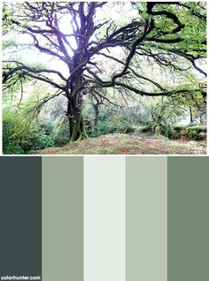 Mighty Tree In The Meadows Of Ireland Color Scheme from colorhunter.com