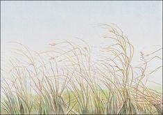 Colored Pencil Demo #7 Autumn Grass