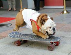;) Hey Crystal, you should teach Mad-dog how to skateboard!
