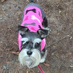 Good day for the dog park. Millie likes to turn heads in her pink pop-art sweater. #popart #bone #dogsofinstagram #millie #schnauzer #schnauzersofinstagram #schnauzerlove #schnauzergram #dogs #hoteldoggy #cuteness #dogsinclothes #dogfashion#dogbrand #dogwear #dogapparel #dogfashionista #dogpark