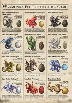 This stunning canvas is a Wyrmilng and egg Identification chart, which is part of the Age of Dragons range by top fantasy artist Anne Stokes. It is a must have for all fans of dragons and Anne Stokes. Magical Creatures, Fantasy Creatures, Dragon Age, Anne Stokes Dragon, Types Of Dragons, Desenhos Harry Potter, Dnd Monsters, Dragon Artwork, Water Dragon