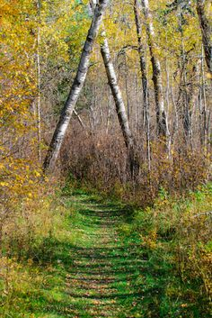 Elk Island in Canada | See More Pictures .  This reminded me of how my woods at home looks in fall I like it.