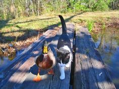 Just a couple of buddies taking a stroll <3