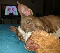 """""""What? Oh I'm good just cuddle chomping my moose!"""""""