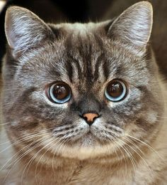 "so cute  **<>**✮✮""Feel free to share on Pinterest""✮✮"" #catsandme"
