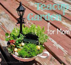Tiny teacup fairy garden...