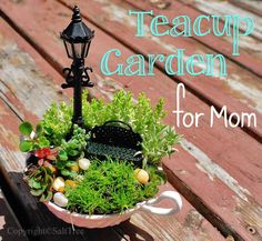 teacup fairy garden -- great Mother's Day gift!