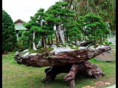 a bonsai tree forest . Bonsai Tree Types, Indoor Bonsai Tree, Bonsai Plants, Bonsai Garden, Plantas Bonsai, Bonsai Forest, Tree Forest, Belle Plante, Bonsai Styles
