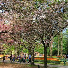 Stunning  remembering lifetimeexperience lastmonth keukenhof nisse holland tulips capital of tulip netherlands visit travel garden famousgarden u