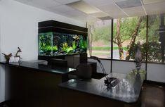 17 projetos notáveis do aquário para realçar & embelezar seu interior