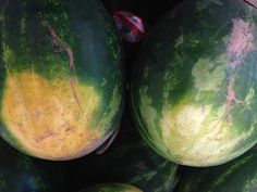 If you have ever bit into a watermelon only to be disappointed to find it dry and flavorless, this article is for you. Watermelon Hacks, Picking Watermelon, Perpetual Motion, Tree Seeds, Surefire, Food Facts, Summer Treats, Crazy People, Healthy Options