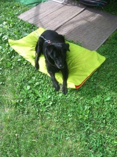 No sew DIY dog bed that really IS washable