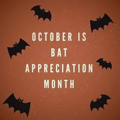 Halloween Quotes, Fall Halloween, October Country, Creatures Of The Night, Stay The Night, Holiday Traditions, Dusk, Appreciation, Bats