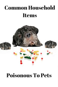 Did you know that March is Poison Prevention Awareness Month? Check out our latest article on common household items poisonous to pets to help keep your furry family members safe.