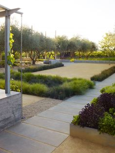 Grasses provide soft look contrasting with trees. Medlock Ames | Nelson Byrd Woltz