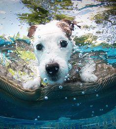 Un #jackrussell buceador! #soydeperro #perro