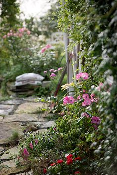 Fabulous Cottage Pinks Feathered Pinks uAlba Plena u Dianthus plumarius Plants to die for Pinterest Pink and Cottages
