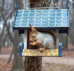 Happy Squirrel, Peanuts Snoopy, Woodland Creatures, Chipmunks, Bird Feeders, Mammals, Cute Animals, Squirrels, Gatos