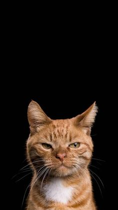 Ideas funny animals wallpaper wallpapers for 2019 Iphone Wallpaper Cat, Tier Wallpaper, Cute Cat Wallpaper, Animal Wallpaper, Wallpaper Wallpapers, Iphone Wallpapers, Cute Funny Animals, Funny Animal Pictures, Funny Cats