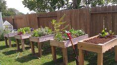 Counter Height Garden Boxes 2 feet x 4 feet diy garden box Diy Garden Bed, Garden Boxes, Garden Planters, Fence Garden, Garden Art, Balcony Herb Gardens, Galvanized Planters, Raised Gardens, Gravel Garden