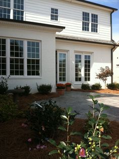 New home foundation plantings including Bloodgood Japanese Maple and Sasanqua Camellia. wwwHawkinsLA.com