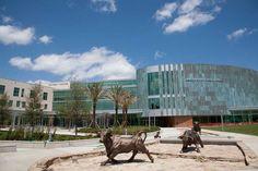 University of South Florida-Main Campus-Tampa