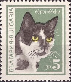 European Domestic Cat (Felis silvestris catus)