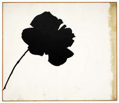 Jannis Kounellis, Black Rose, 1967