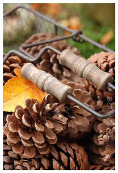 Autumn textures  #fall #pinecones