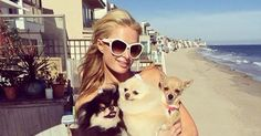 Paris Hilton enjoying the Malibu sun wearing Tom Ford Angelina sunglasses shop yours here http://www.toniandguy-opticians.com/shop/products/Tom-Ford-Sunglasses-TF-0317.html