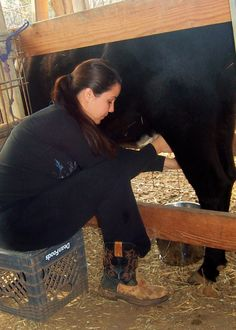 """Dexter cattle: as small as some of the larger """"mini"""" breeds. A good family dairy cow Agriculture, Farming, Dexter Cattle, Chicken And Cow, Mini Cows, Agricultural Practices, Cattle Ranch, Beef Cattle, Farmer's Daughter"""