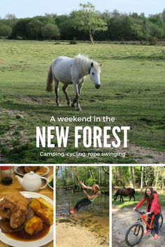 A weekend getaway to the New Forest, where we did camping, hiking, cycling, rope swinging.